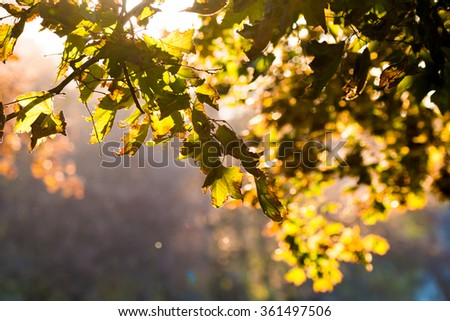 Autumn leaves in the forest. - stock photo
