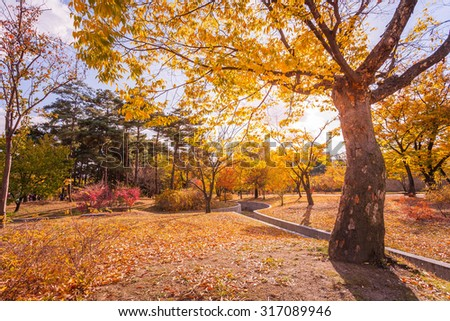 Autumn leaves in the park. - stock photo
