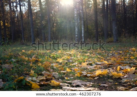 Autumn leaves in the woods on a sunny day