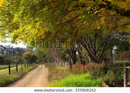 Autumn leaves in trees overhanging a farm road - stock photo