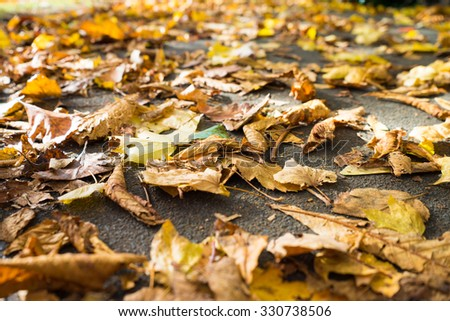 Autumn leaves, isolated and scattered on a concrete pavement.  Only part of the image is in focus.