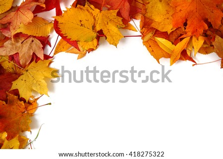 autumn leaves isolated on the white background