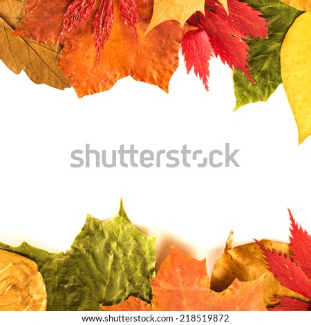 Autumn leaves isolated on white/ Autumn leaves isolated on white