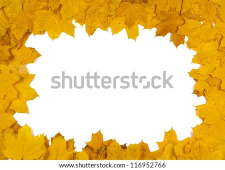 autumn leaves isolated on white background