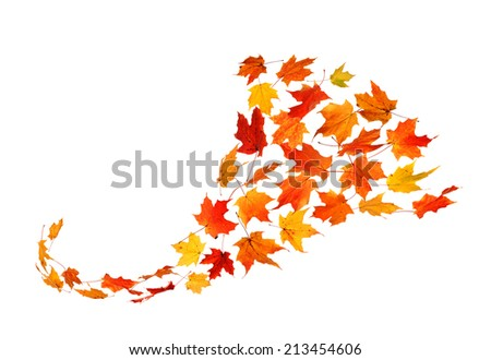 Autumn Leaves Isolated on White Background in Cornucopia form - stock photo
