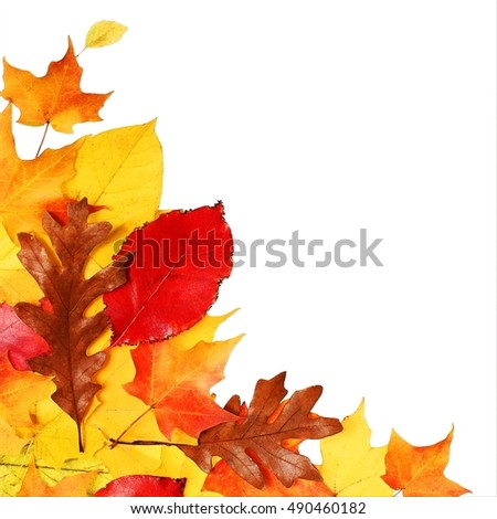 Autumn Leaves isolated on white. Fall