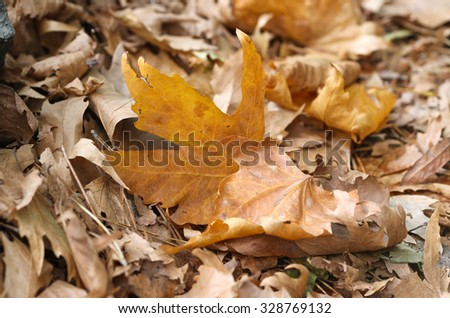 Autumn leaves laying on ground.