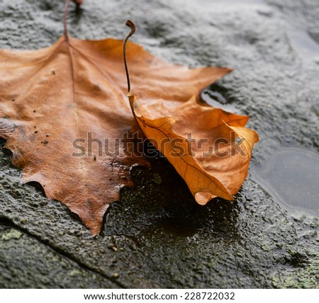 Autumn leaves lying on stone pavement
