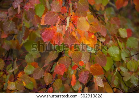 Autumn leaves. Nature backgrounds photo