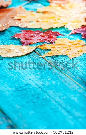 autumn leaves on a beautiful board. wet leaves after a rain. October and November leaves . background for photos . water drops. there is a place for an inscription. 