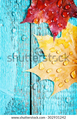 autumn leaves on a beautiful board. wet leaves after a rain. October and November leaves . background for photos . water drops. there is a place for an inscription. closeup - stock photo