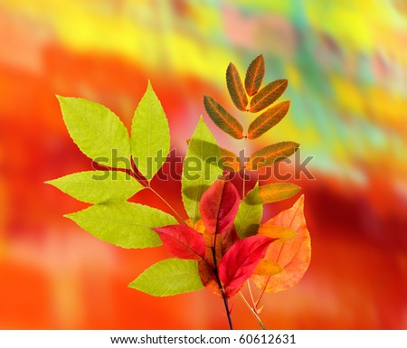 Autumn Leaves on a color background - stock photo