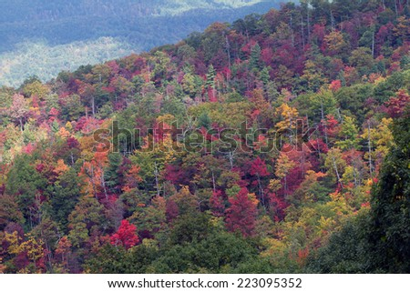 Autumn leaves on a hillside in Great Smoky Mountains National Park in Tennessee - stock photo