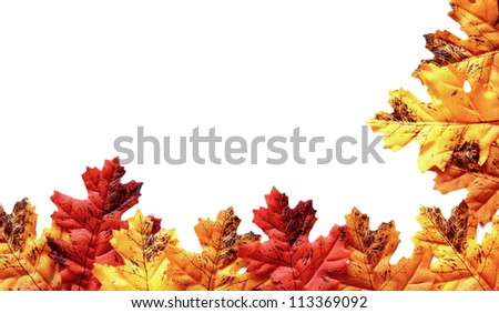 autumn leaves on a white background