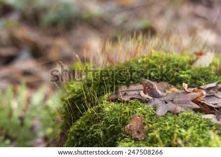 autumn leaves on blooming moss  - stock photo