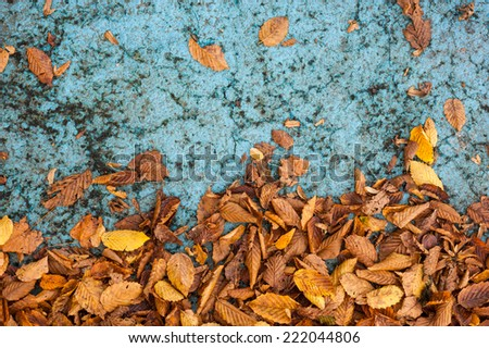 autumn leaves on blue ground concrete texture