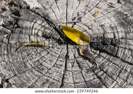Autumn leaves on old woods - stock photo