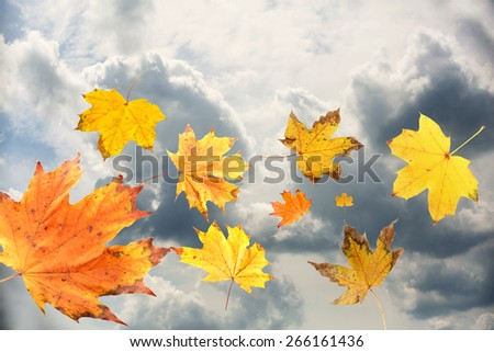 Autumn leaves on sky background - stock photo