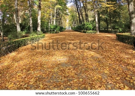 autumn leaves on the road and trees