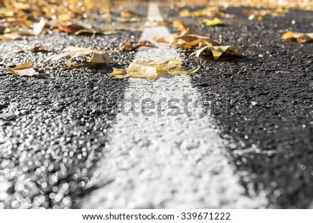 Autumn leaves on the road. Toned photo.