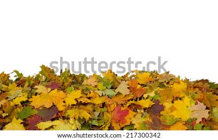 Autumn  leaves on white background - stock photo