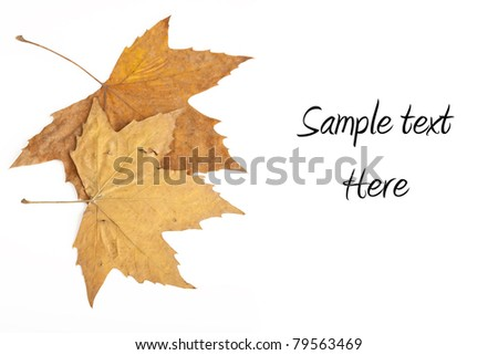 Autumn leaves on white with copy space - stock photo
