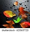 Autumn Leaves over black - stock photo
