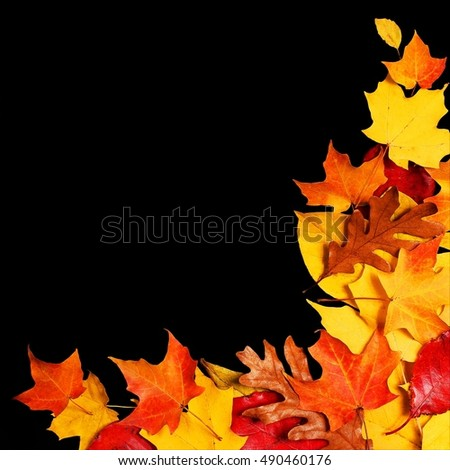 Autumn Leaves over Black Background with Copy Space. Fall