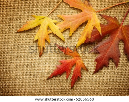 Autumn Leaves over Burlap background - stock photo