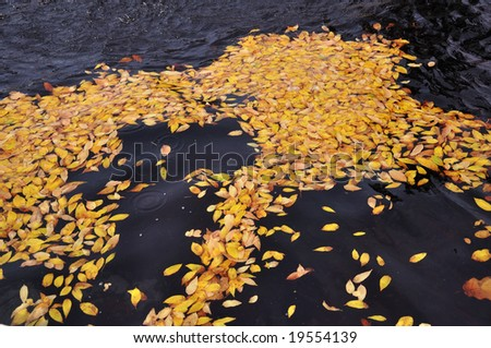 Autumn leaves over fountain water in the beggining of fall.