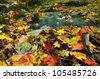 Autumn leaves over small stream in Poland. Jura Krakowsko-czestochowska - stock photo