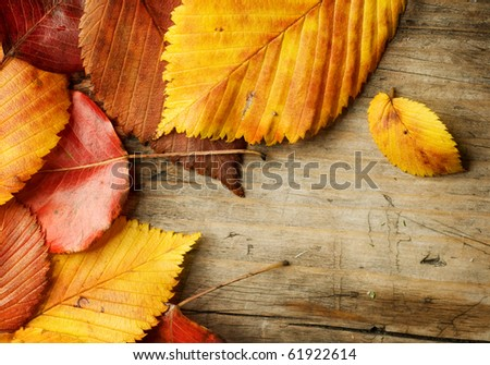Autumn Leaves over wooden background - stock photo