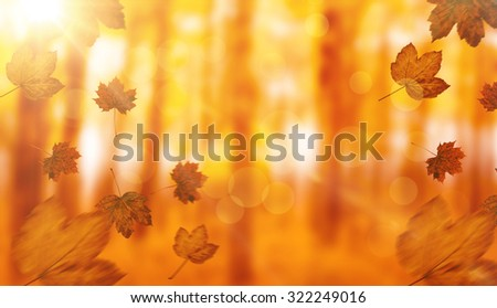 Autumn leaves pattern against view of a forest in the mist