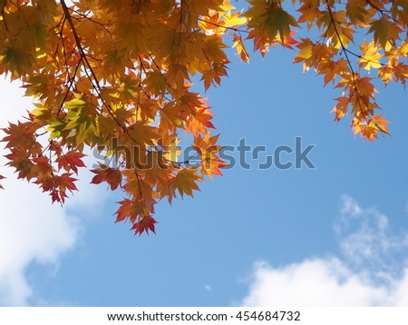 Autumn leaves, red and yellow against blue sky and cloud background - stock photo