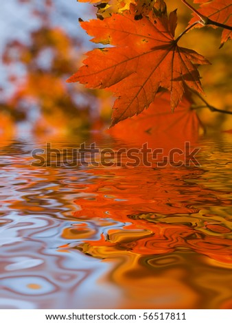 autumn leaves reflecting in water - stock photo
