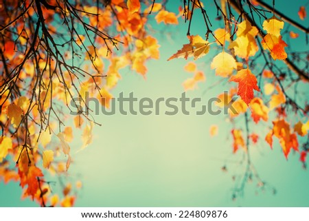 Autumn leaves sky background/ Autumn Trees Leaves in vintage color