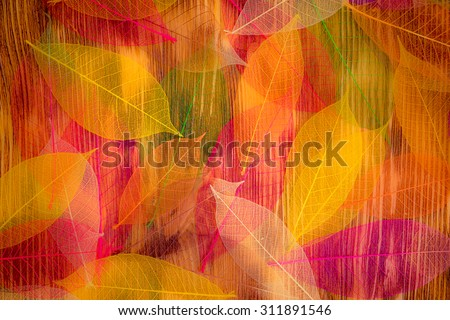 Autumn leaves texture. Abstract background - stock photo