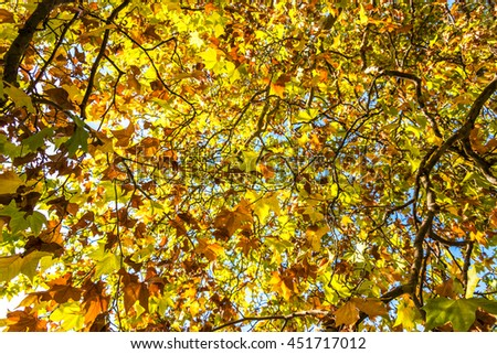 Autumn leaves texture. Yellow and green foliage of early fall season background, wallpaper - stock photo