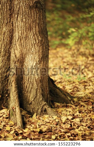 Autumn leaves under the trees - stock photo