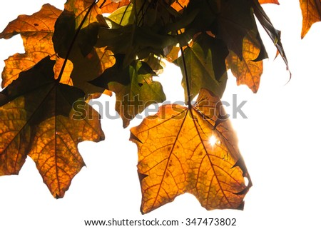 Autumn leaves with sun-flare through a decayed hole - stock photo