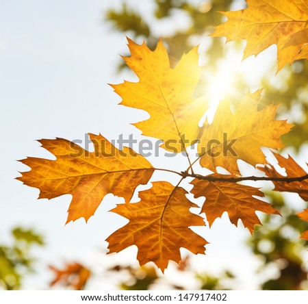 Autumn leaves with sunlight - stock photo