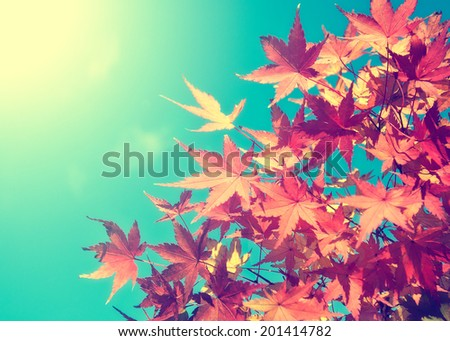 Autumn leaves with the blue sky background,retro concept - stock photo