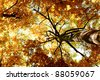 Autumn Leaves Woods Landscape - stock photo