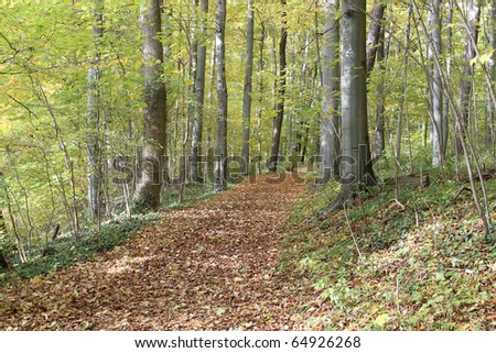 Autumn leaves yellow wood tree trunks grass - stock photo