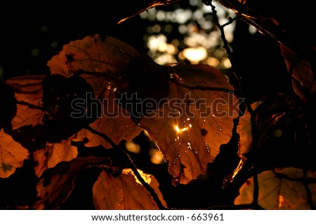 Autumn Light & Leaves