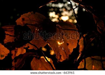 Autumn Light & Leaves - stock photo