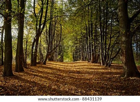 autumn lime alley - stock photo