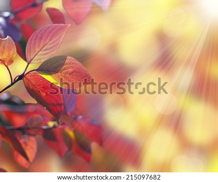Autumn many-coloured leaves on bright  background - stock photo