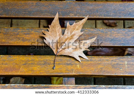 Autumn maple dry leaf on the wooden bench - stock photo