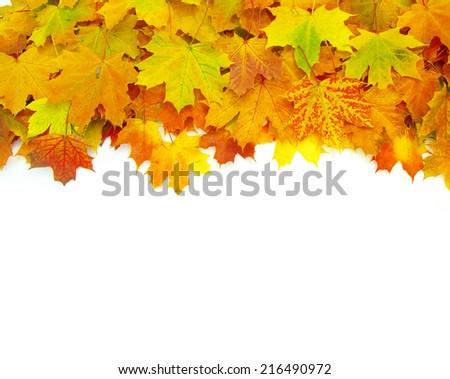 autumn maple leaf  - stock photo